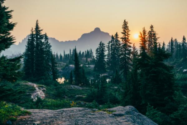 5 Forest Campsites to Try This Year
