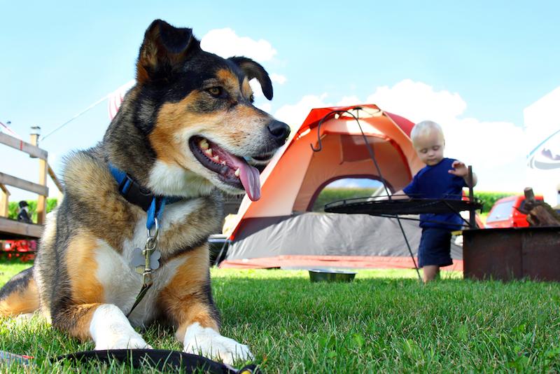 Dog Outside Tent